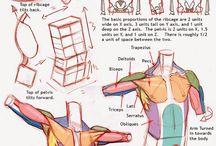 Anatomía profunda. / Huesos, Musculos, Organos, etc.