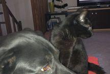 My Animals / I miei cuccioli