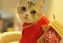 Shat & Cat & 猫 / #Shat #Cat #猫 #ねこ #ネコ / by Etsuko Osaka