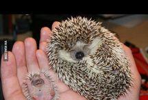 Cuteness! / It so fluffy I'm gonna die!