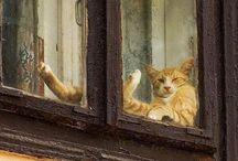 Кошки в окошках)