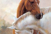 Horse Cavalli