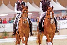 Pas De Deux Paarden