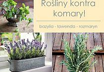 garden/ balcony