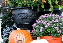 Fall Decorating / by Jennifer Marion Allen