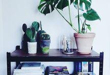 Kaktussssss