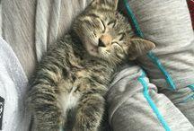 Gato Alex