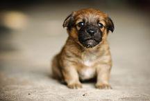 Pets / by Amanda Sager