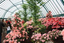 Plantes / Photos de fleurs et plantes en tout genre