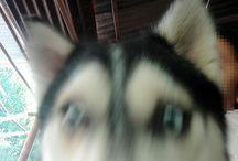 my dog Blue❤