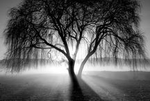 Natur svart hvitt