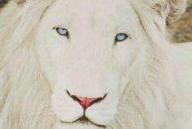 foto de leão