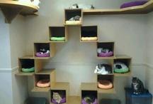 casa dos gatos
