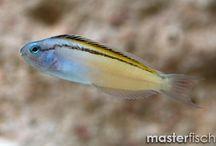 'Patadesign - Peixes Flutuantes / E se os peixes começassem a voar de-repente? Diante desta indagação criam-se cenários.
