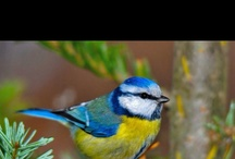 Birds  / by Brenda Landon