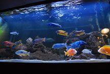 fish & Tanks
