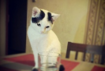 At home / #cat #sweety #animal