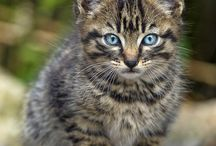 Cute kittens and cats