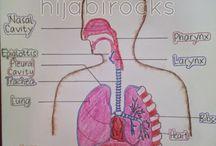 anatomi respiratory