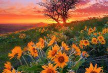 Paesaggi e Natura