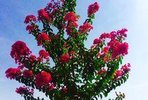 Botanical  / Tree care