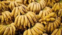 Μπανάνες  και τα μυστικά τους