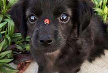 cukimuki kutyák