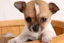 fotos de perros / fotos de perros de raza pequeña