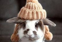 Cute Fuzzy Critters :)