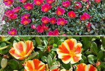 zahrada květiny