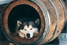 Dogs / by Pierce Lilholt