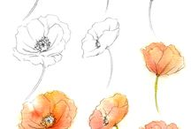 Drawing reference flowers