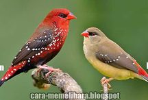 finches birds / Australian and exotic finches