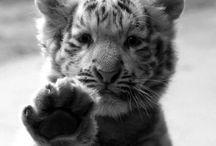 Cute animals / by Stacey Dudewicz