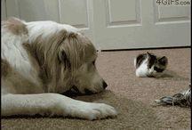 Animalitos en movimiento