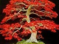 Bonsai / Miniature Trees / by Michael W