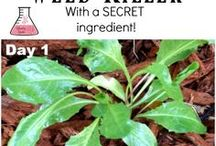 How to make home made weed killer