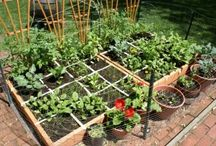 garden / Learning to grow and thrive in my garden space