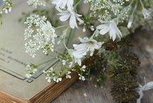 ~ white flowers and books ~