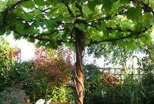 bahçe deorasyonu