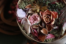 * driedflower *