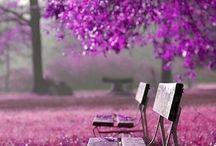 Purple trees in my dreams