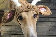 Christmas Greyhound