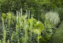 Pershore Garden