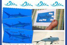 Shark Activities / Shark educational activities and crafts