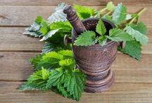 Plantes et bienfaits