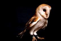 Owl Face Designs