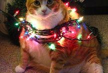 Christmas Joy / 'tis the season / by Kaitlin Price