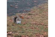 UNH Squirrels / It's all about the squirrels! Pinning pictures, snaps, and videos of the critters around campus. / by University of New Hampshire