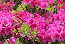 Shrubs for year round color